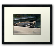 Mother Seal and Cub Framed Print
