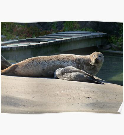 Mother Seal and Cub Poster
