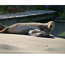 Mother Seal and Cub Photographic Print
