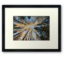 Colorful trees and sky Framed Print
