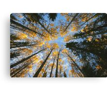 Colorful trees and sky Canvas Print