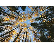 Colorful trees and sky Photographic Print