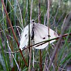 Moth in the grass by KelShel