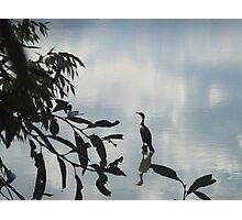 Heron at Crown Hill Photographic Print