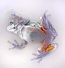 Frog on Glass by Debbie Pinard
