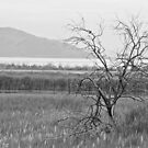 Lonely Tree (B&W) by Robert  Miner