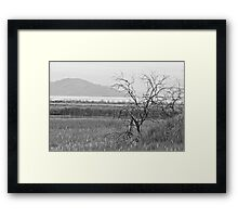 Lonely Tree (B&W) Framed Print