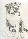 Puppy boy Indy by Michael Haslam