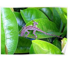 Juvenile Cuban Anole Lizard - Florida Poster