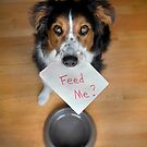 Feed Me? by Jennifer S.