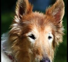 Lassie Girl by AngieBanta
