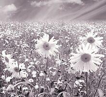 Daisy Field by clare barton