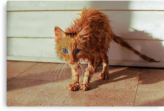 Wet Kitty by Phil Campus