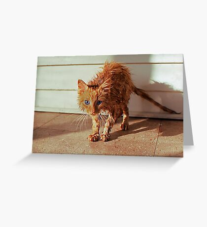 Wet Kitty Greeting Card