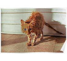 Wet Kitty Poster