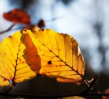 Leaf by cameraimagery