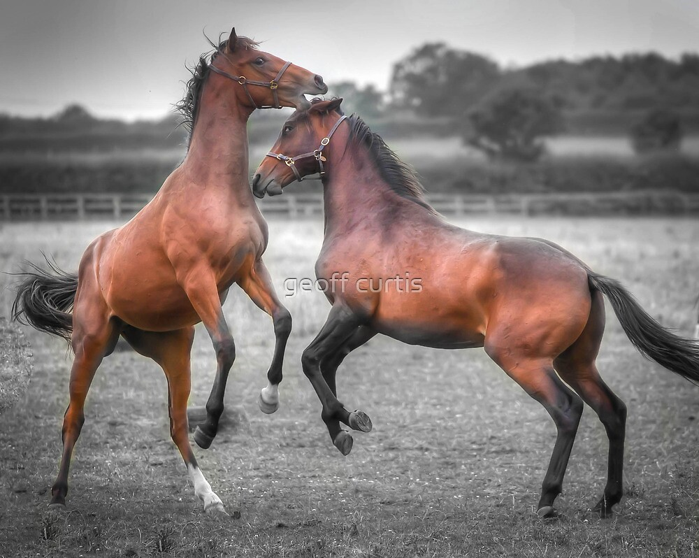 Horse Play by geoff curtis