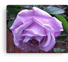 Demure Rose Canvas Print
