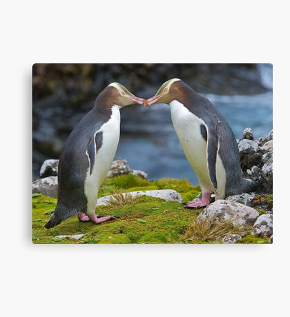 Yellow-eyed Penguins Canvas Print