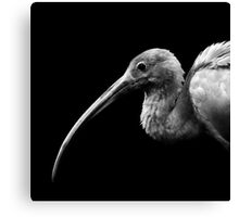 Not so Scarlet Ibis Canvas Print