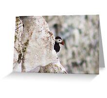 peeking puffin Greeting Card