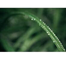 Leaf Droplets   Photographic Print