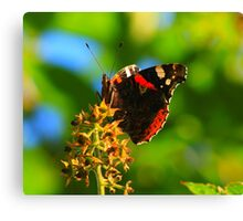 Red Admiral Butterfly, Nunnery Lane, Darlington.England Canvas Print