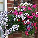 Pretty Hanging Basket by BlueMoonRose