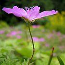 Purple flower 3 by Tracy Friesen