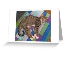 A Tabby Kitten Named Taffy Greeting Card