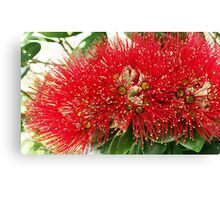 New Zealand Pohutukawa Canvas Print