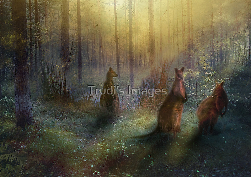 Hush by Trudi's Images