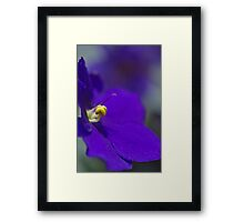 Purple Violet Framed Print