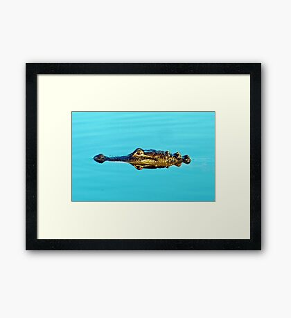 Reflecting Gator Framed Print