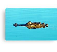 Reflecting Gator Canvas Print