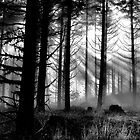 Out Of The Dark by Charles & Patricia   Harkins ~ Picture Oregon