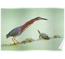 Green Heron and Turtle Share a Log. Poster