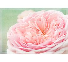 French Kiss Rose Photographic Print