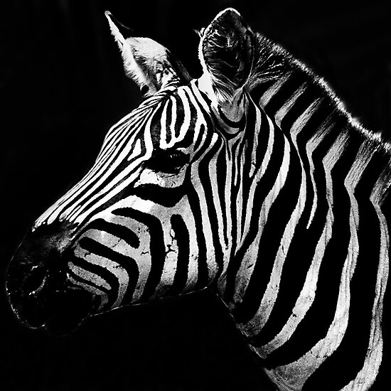 Stripes by Damienne Bingham
