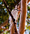 Bird watching by Andrew Dickman