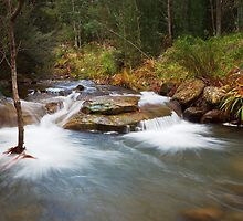 New Town Rivulet, Hobart, Tasmania by Chris Cobern