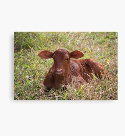 """""""Oh, a baby cow!""""  Canvas Print"""
