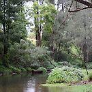 Tallebudgera Creek During a Winter Sprinkle by aussiebushstick