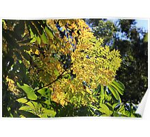 Leaves in the Winter Sunshine Poster