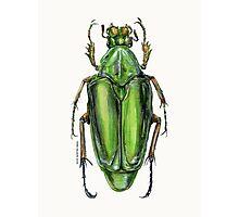 Scarab Beetle Photographic Print