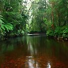 Black River at Mawbanna in nor west Tasmania , Australia by phillip wise