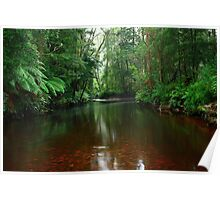 Black River at Mawbanna in nor west Tasmania , Australia Poster