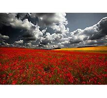 Norfolk Poppy Fields Photographic Print