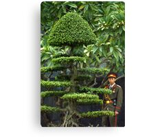 Vietnamese Soldier Hiding in the Topiary Canvas Print