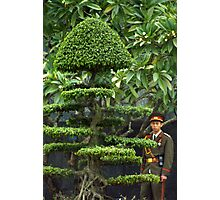 Vietnamese Soldier Hiding in the Topiary Photographic Print